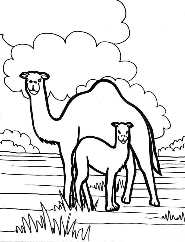 Camel In The Meadow Coloring Page Download Print Online Coloring