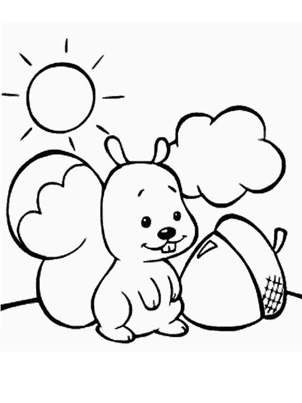 Cute Baby Squirrel And Oak Nut Coloring Page - Download ...