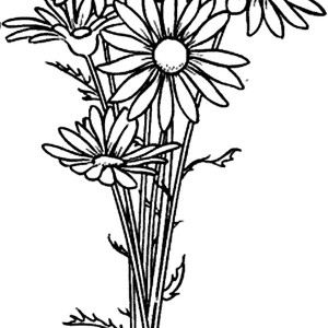 Daisy Flower Arrangement Coloring Page
