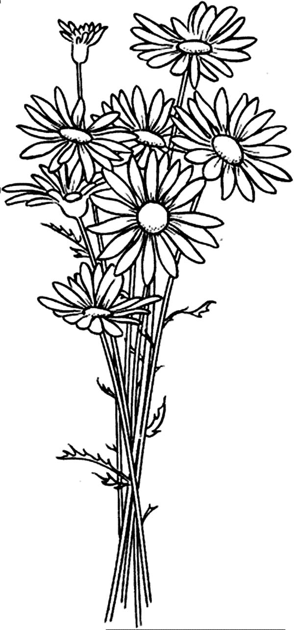 Daisy Flower Arrangement Coloring Page Download Amp Print