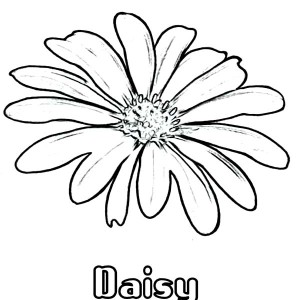 Daisy Flower Coloring Page For Kids