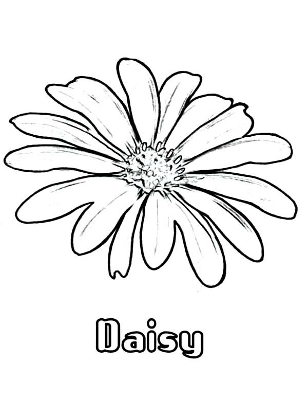 Daisy Flower Coloring Page For Kids Download Print Online Rhcolornimbus: Coloring Pages Daisy Flowers At Baymontmadison.com