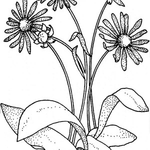 Daisy Flower For Flower Bouquet Coloring Page