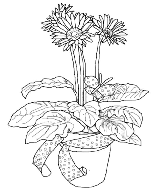 medium daisy flower coloring pages - photo#16