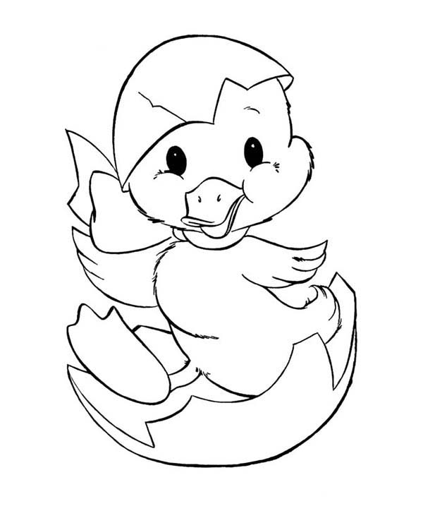 duck egg coloring pages - photo#1