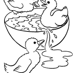 Duckling Swimming In Bowl Coloring Page