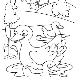 Duckling Is Happy Swim With Her Mom Coloring Page
