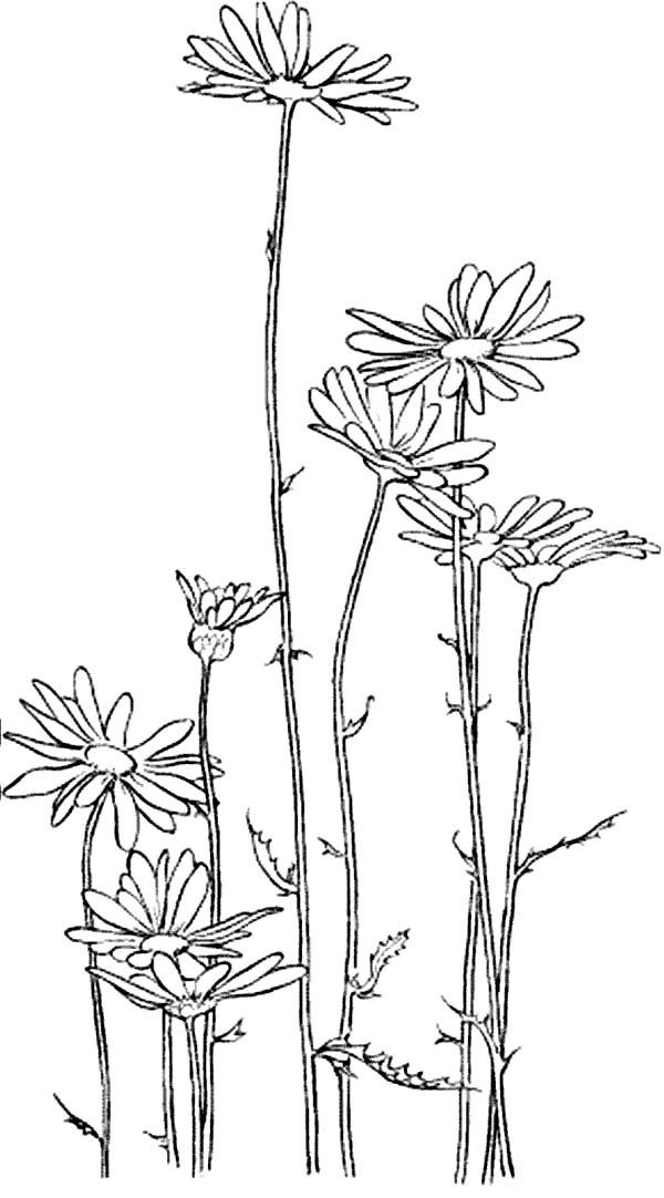 Garden Of Daisy Flower Coloring Page Download Print Online Coloring Pages For Free Color Nimbus