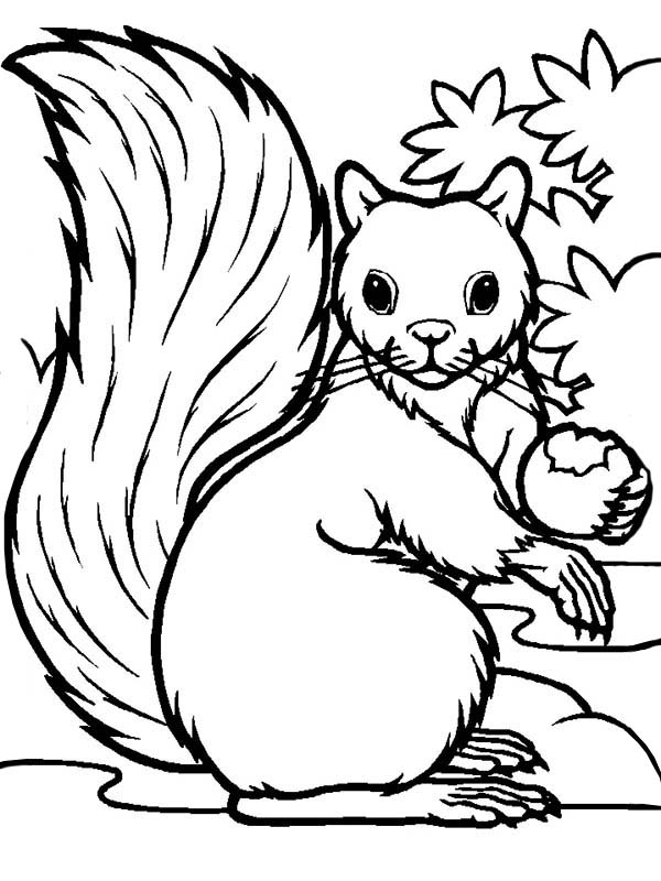 Hungry Squirrel Eating Coloring Page - Download & Print ...