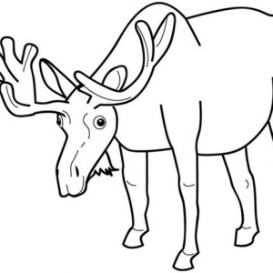 Moose Eating Grass Coloring Page