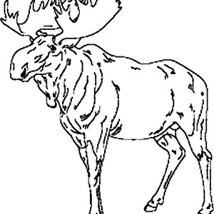 Moose Leader Coloring Page