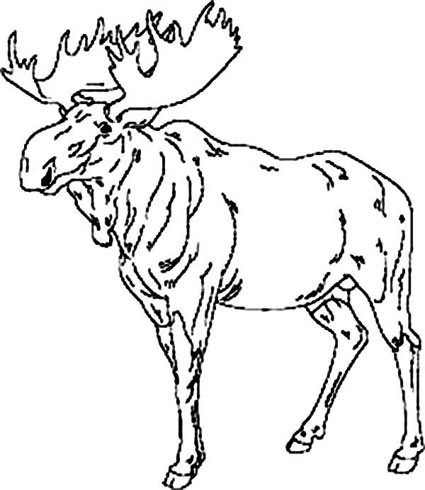 moose leader coloring page download amp print online
