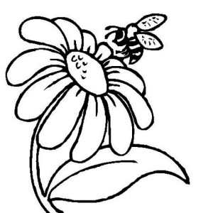 Mr Bee And A Daisy Flower Coloring Page