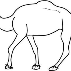 Picture Of Camel Coloring Page