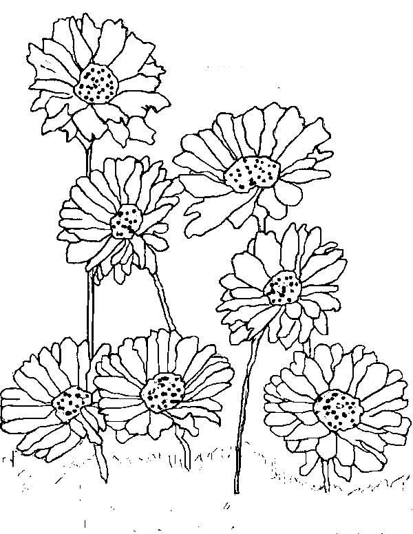 Planting Daisy Flower Coloring Page Download Amp Print