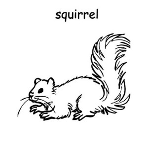 S Is For Squirrel Coloring Page