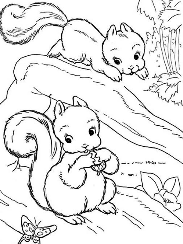 two baby squirrel coloring page download amp print online