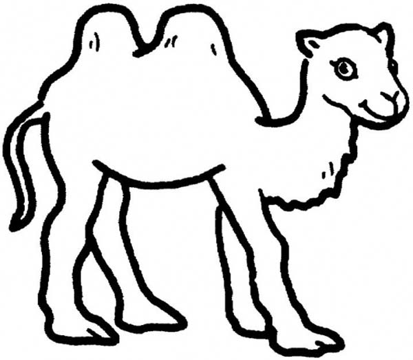 Two Humped Camel Coloring Page Download Print Online Coloring - Camel-coloring-pages