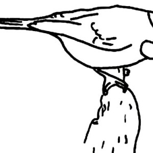 Chickadee Coloring Page For Kids