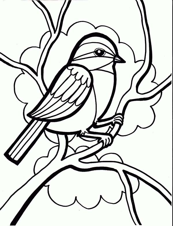 Chickadee Drawing Coloring Page