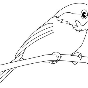 Chickadee Picture Coloring Page