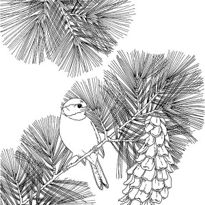 Chickadee Sit On Pine Tree Coloring Page