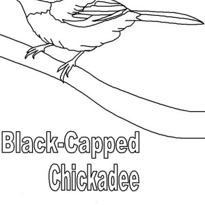 Cute Black Capped Chickadee Coloring Page