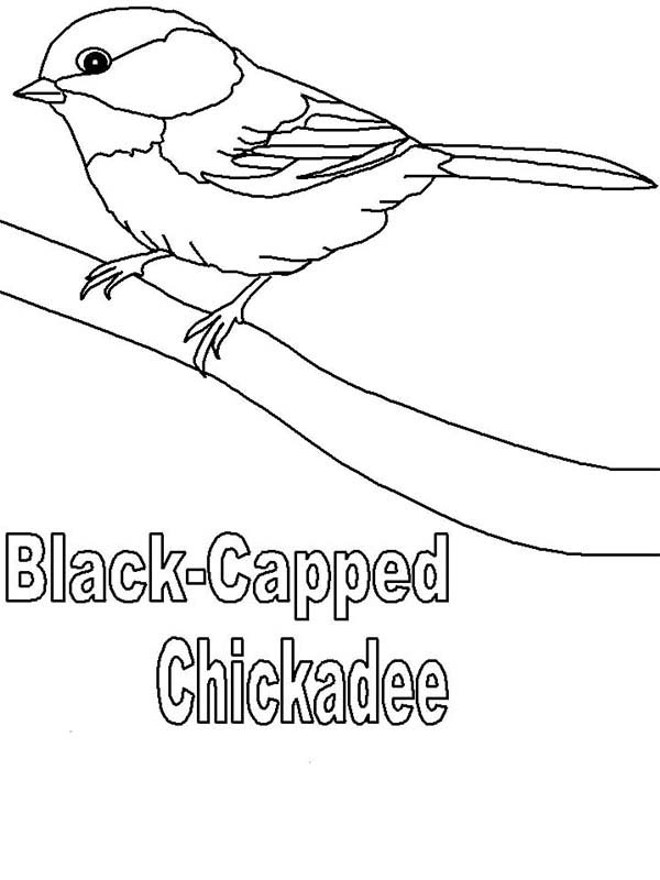 Cute Black Capped Chickadee Coloring