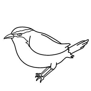 Kids Drawing Of Chickadee Coloring Page