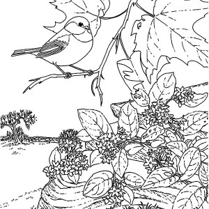 Picture Of A Chickadee Sitting On Tree Branch Coloring Page