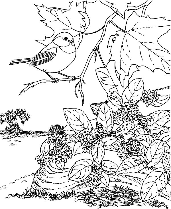 Coloring pages tree branch ~ Picture Of A Chickadee Sitting On Tree Branch Coloring ...