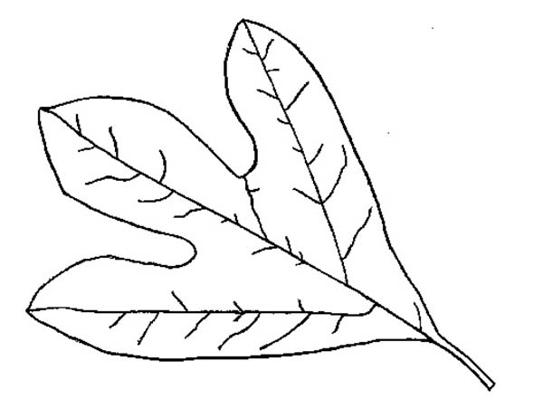 Autumn Leaf Coloring Page - Download & Print Online Coloring Pages For Free  Color Nimbus