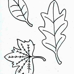 Autumn Leaf Image Coloring Page
