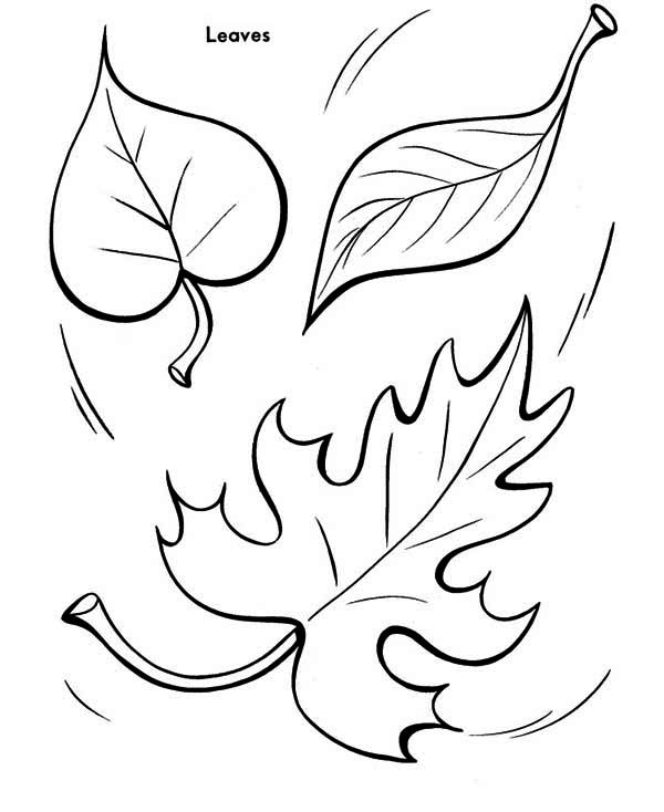 Autumn Leaf To The Ground Coloring Page - Download & Print ...