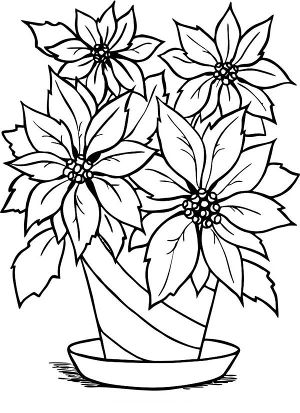 Charming Poinsettia Flower In Flowerpot Coloring Page Download