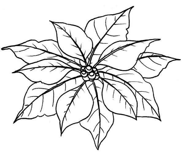 Couple Of Poinsettia Flower Leaves Coloring Page Download Print