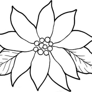 Gorgeous Poinsettia Flower Coloring Page