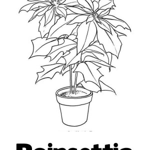 Lets Learn Letter P Of Poinsettia Flower Coloring Page