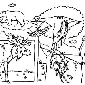 National Animals On Canada Day Coloring Pages