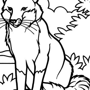 Alpha Male Kit Fox Coloring Pages