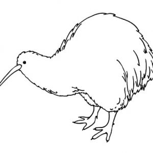 Amazing Animal Kiwi Bird Coloring Pages