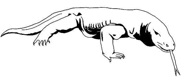 Amazing Animal Komodo Dragon Coloring Pages Download Print
