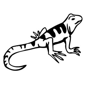 Amazing Animal Lizard Coloring Pages