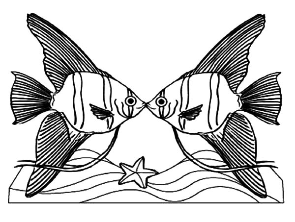 Angelfish coloring page | Free Printable Coloring Pages | 453x600