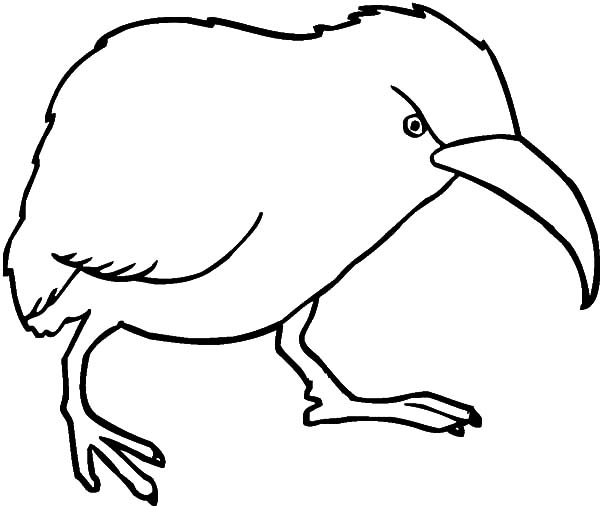 Angry Kiwi Bird Coloring Pages Download Print Online Coloring