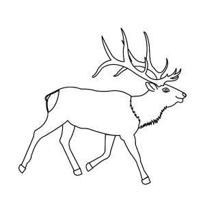 Awesome Elk Antlers Coloring Pages