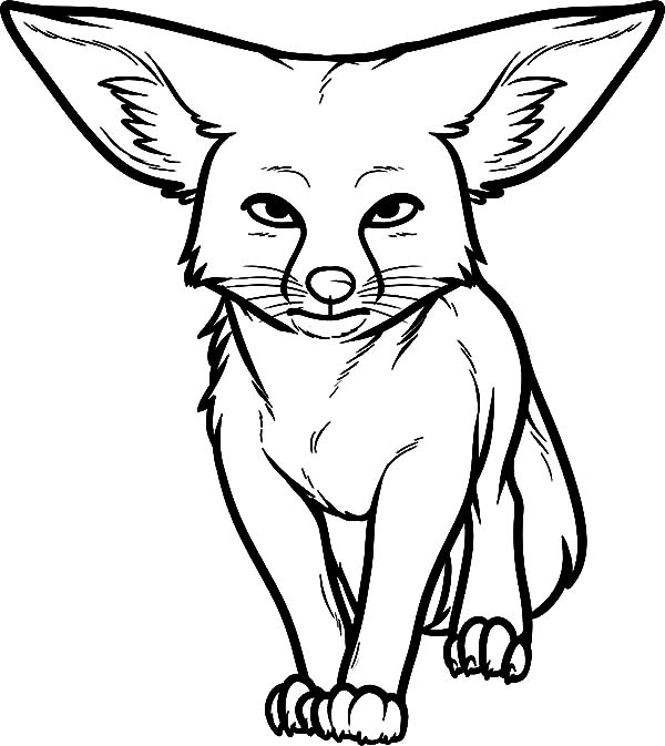 Big Ear Kit Fox Coloring Pages Download Print Online Coloring Pages For Free Color Nimbus