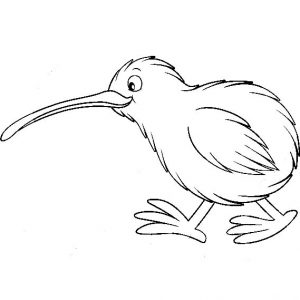 Cute Kiwi Bird Coloring Pages