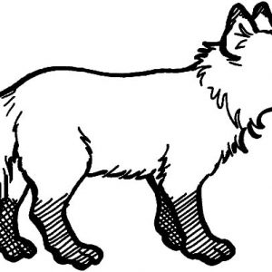 Dirty Feet Kit Fox Coloring Pages