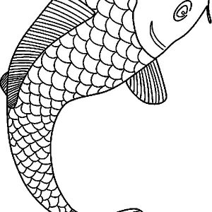 Drawing Koi Fish Coloring Pages